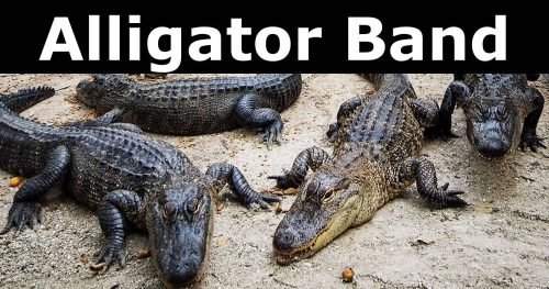Alligator Band poster e1551882047856 - Alligator Band